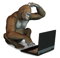 Confused Monkey on Computer Image